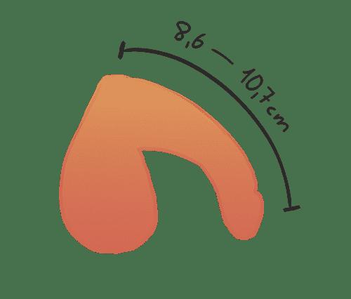 Durchschnitts penis größe
